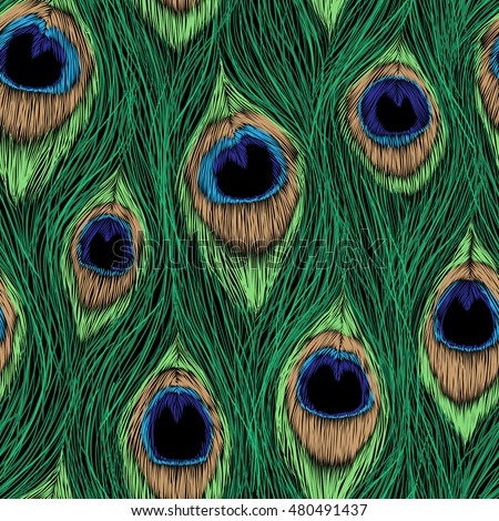 peacock feathers design vector