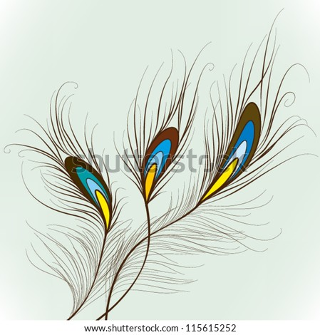 Peacock Feathers  Elements for design, EPS10 Vector background