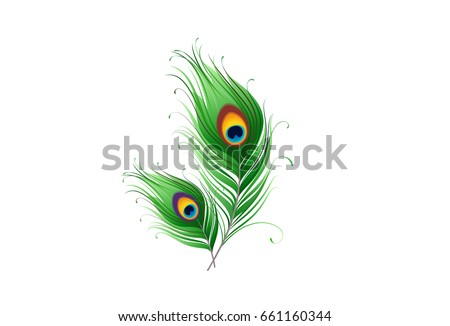 peacock feathers on a white