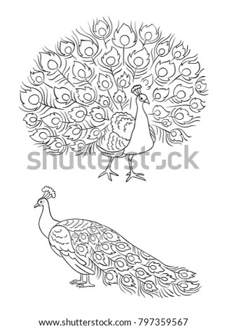 peacock in outlines   front and