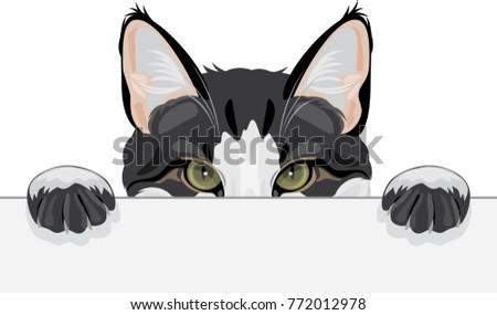 peeping funny cat vector