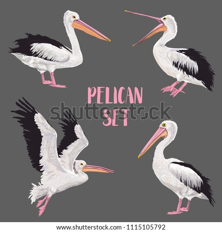 Stock Photo Pelican Birds Set. Animals in the Wild. Wildlife Seabirds. Watercolor Waterbird. Vector illustration