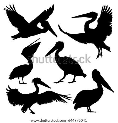 Pelican silhouette set. Vector illustration