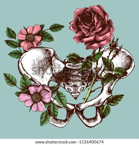 Pelvic bone anatomy, illustrated blossom  bony pelvis. Hand-drawn vector illustration for your unusual design.