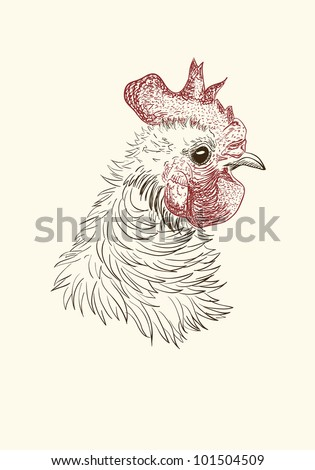 Pen and ink illustration of rooster