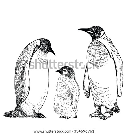 penguin sketch hand drawn