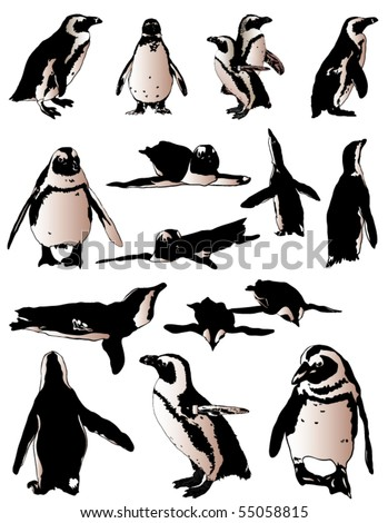 penguins collection