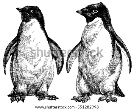 penguins drawing adelie
