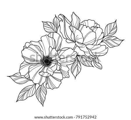 Rose flower vector background black and white download free vector peony flower black and white mightylinksfo