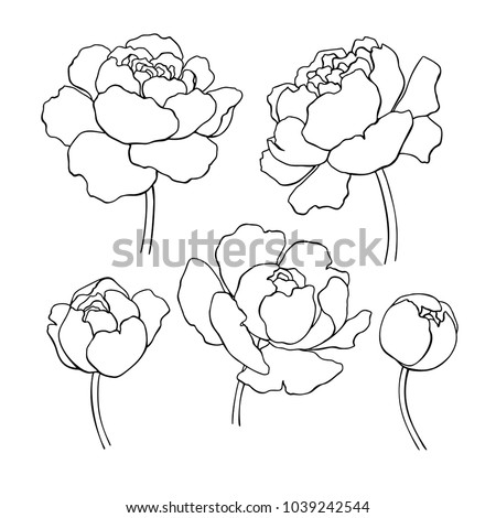 Peony line drawing. Vector hand drawn outline flower set. Simple botanical peonies countur. Black ink sketch. Great for tattoo, invitations, greeting cards, decor