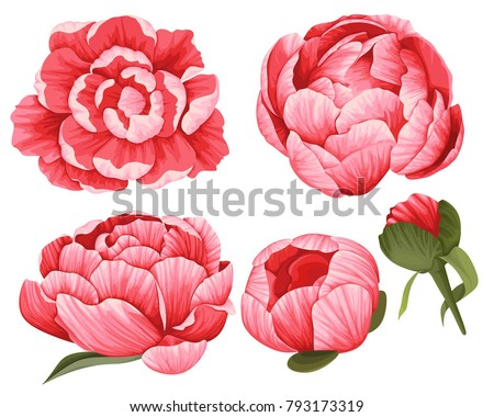 Peony Vector Clip Art Set of 5 Red Flowers image