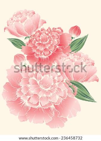 peony vector illustration