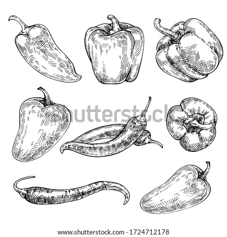 Pepper hand drawn set. Sketch red hot chili peppers and bell peppers. Organic Vegetables. Sketch Vegetable. Engraved style  illustration.