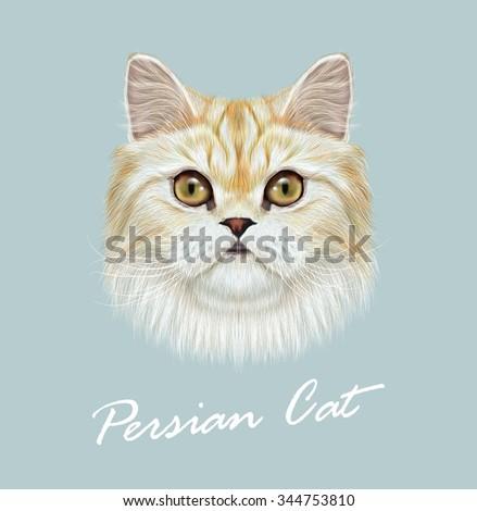 persian cat purebred animal