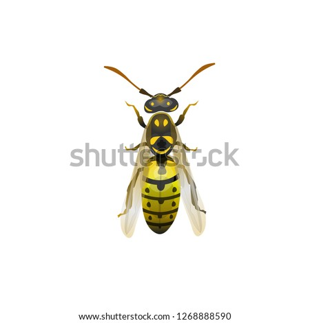 Pest insect. Yellow striped wasp. Vector illustration isolated on white background.