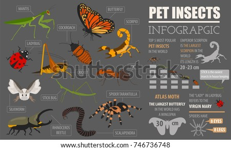 pet insects breeds icon set