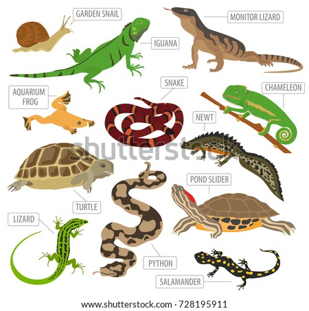 Shutterstock Pet reptiles and amphibians icon set flat style isolated on white. House keeping this animals collection. Create own infographic about pets. Vector illustration