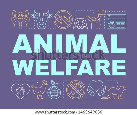 pet shelter  animal welfare