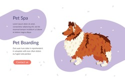 Pet Spa and Pet Boarding landing page template. Collie dog breed. Flat vector illustration. Pet care banner for grooming salon and shops. Animal guide, business card, flyer, social network.