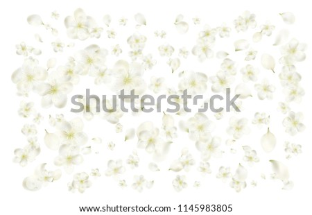 petals and flowers of a