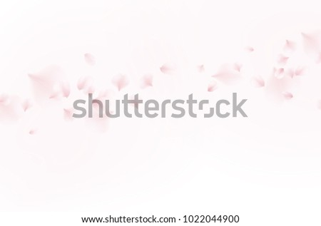 Petals of rose isolated on white background. Realistic pink sakura falling petals pattern. Flying blossom cherry flower elements for romantic wedding invitation design.