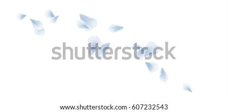 petals roses flowers white