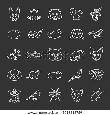 Pets chalk icons set. Exotic animals. Rodents, birds, reptiles, insects, dogs, cats. Isolated vector chalkboard illustrations