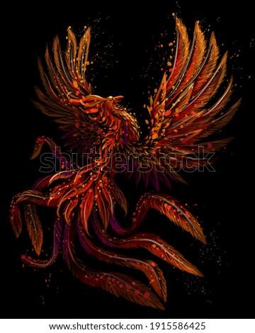 phoenix color  graphic