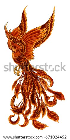 phoenix fire bird illustration