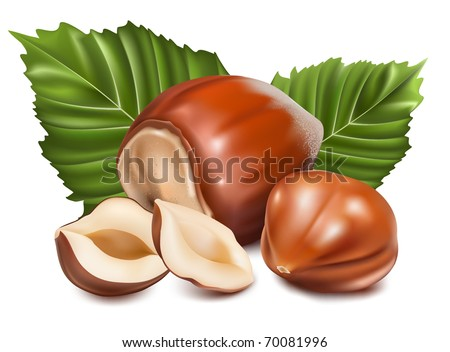 Photo-realistic vector illustration. Hazelnuts with leaves. - stock vector