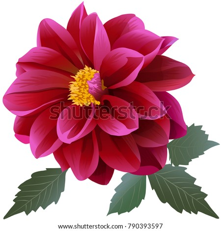 photorealistic red dahlia