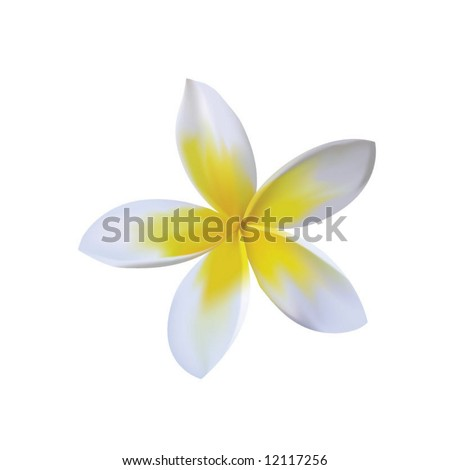 photorealistic vector of plumeria