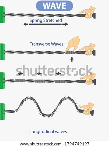 physics. spring stretched. transverse waves. longitudinal. The difference between throwing and periodic wave formation. longitudinal wave generation. periodically generated transverse waves. infograph