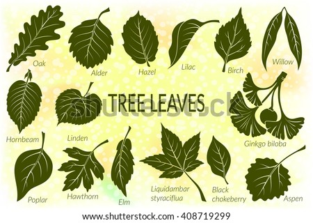 pictograms set  tree leaves