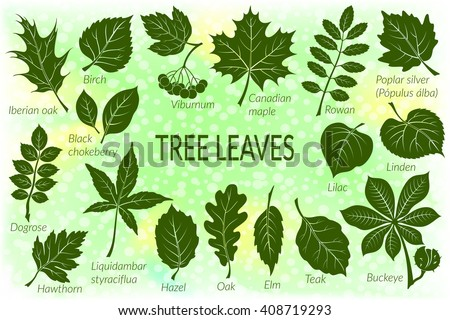 pictograms tree leaves  dogrose