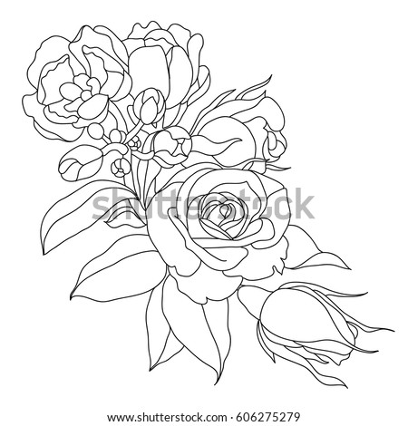 stock-vector-picture-of-peony-flowers-in-lines-vector