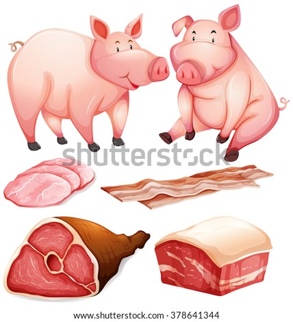 Pig and pig products illustration