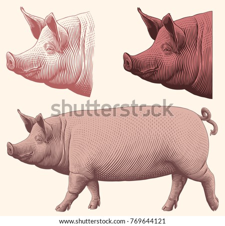 Pig. Design set. Hand drawn engraving. Vector vintage illustration. Isolated on light background. 8 EPS