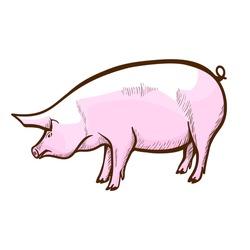 Pig hand drawn icon. Swine, piglet. Hog-raising farm, piggery. Pork production. Domestic, agriculture animal, mammal. Livestock, farmyard. Vector illustration isolated on white background.