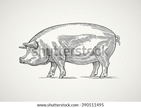 pig in graphic style  hand...