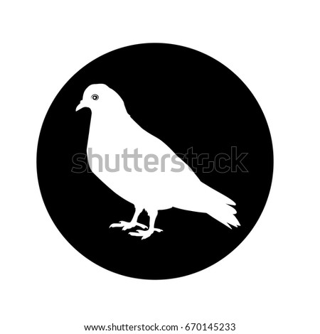 pigeon icon   in the black