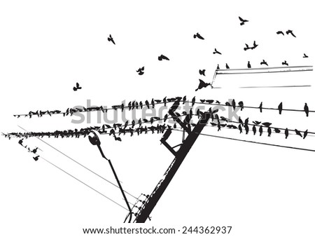 pigeon on wire and flying
