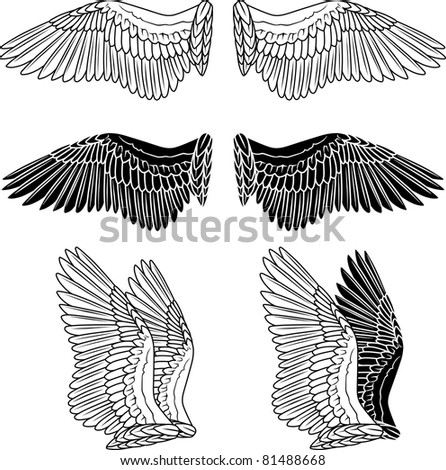 Pigeon wings isolated on white