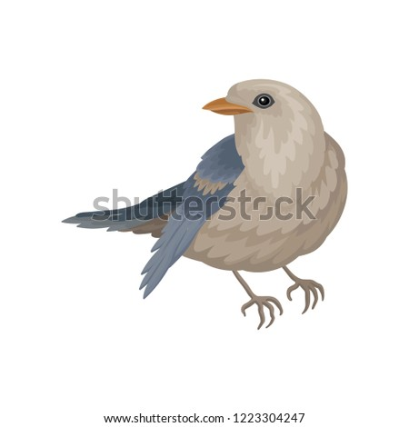 pigeon with blue gray plumage
