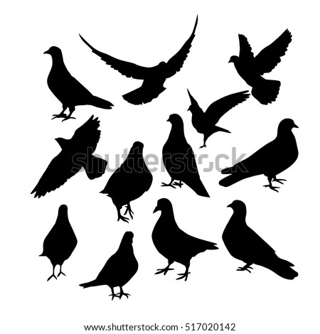 pigeons silhouette vector