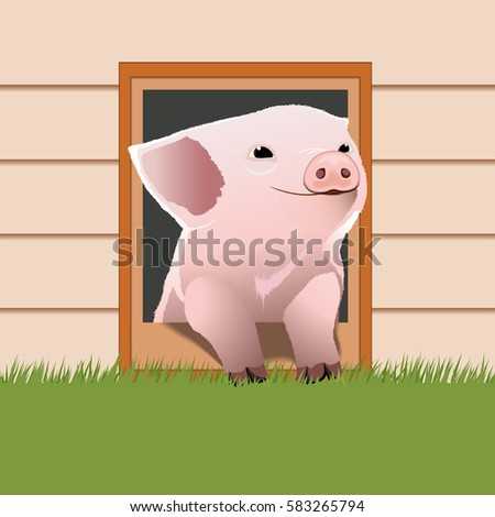 piglet come out from the pet