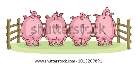Pigs back view on a white background