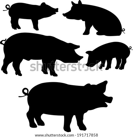 pigs collection   vector