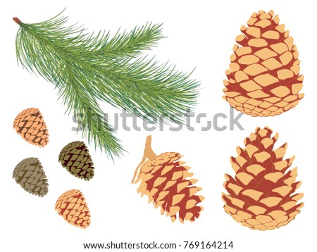 Pine branch set. Vector set of pine branch and different cones.