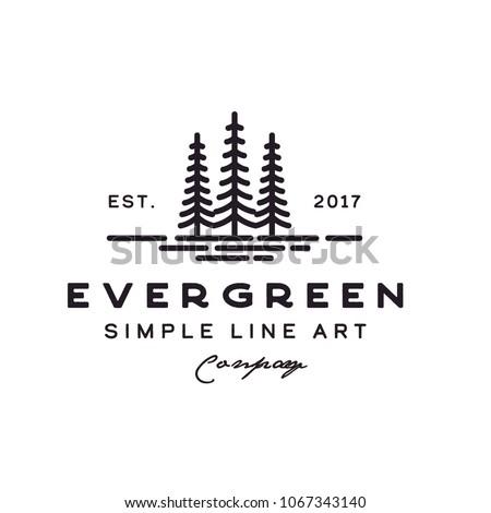pine evergreenblue spruce tree